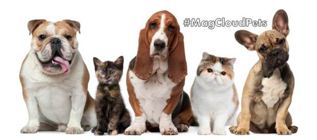 MagCloudPets blog and feature image